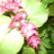 növények 010