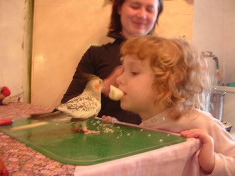 Noémi unokám és a Lizi csirke
