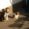 A három gyönyörű kutya csajszim