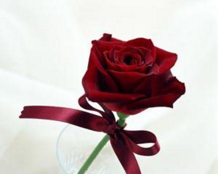 egy szál p.rózsa