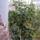 Böszörményiné Valika virágai