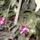 Kaktuszok_962925_18234_t