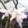 Picasa_orchidea_201002-003_962445_86988_t