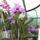 Picasa_orchidea_201002-004_962444_27031_t