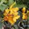 Picasa orchidea 2010.02