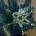 Csillag-002_965807_21741_t