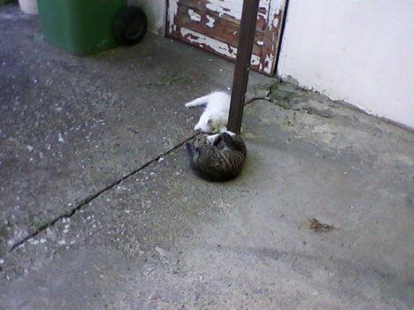 két cicus az oszlopnál