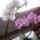 T.Erika virágai