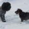 Téli kutyaörömök 1