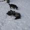 Téli kutyaörömök 2