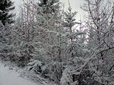 a csupasz bokrok is szépek havas diszben