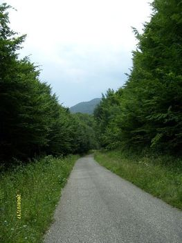 Erdei út a völgyben, ki tudja, hová vezet