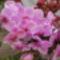 Orchidea!