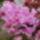 Orchideak_96040_335756_t