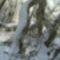 Fatörzsek a hóban