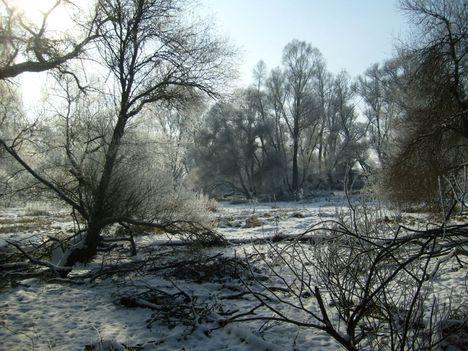 Holtág téli napsütésben