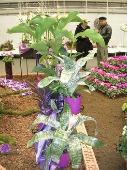 2010 virágkiállítás Kecel 10
