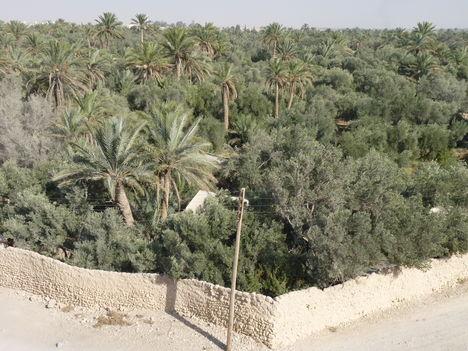 Palmyra   Oázis