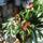 Sályi Tiborné Erzsike növényei