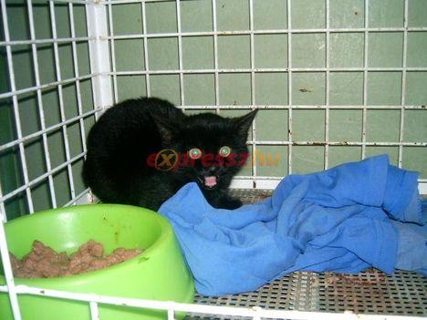 Illatoson S.O.S. megrettent fekete cica