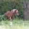 Bözödújfalunál találtunk egy lovacskát :)