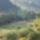 Erdely_10-002_989671_16208_t