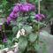 Vanilia virág -sajnos, teleltetni kell