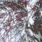 Balaton jegéről kívánok Kellemes ünnepeket! 5