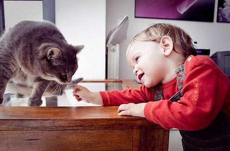 cica-baba-gyerek