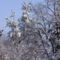 téli képek 11 Sümeg