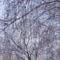 téli képek 13 Sümeg
