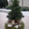 karácsonyi hangulataim 12
