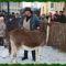 Betlehem és Vásár Szanyban 054