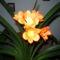 növények 061