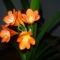 növények 062