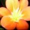növények 063