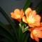 növények 064