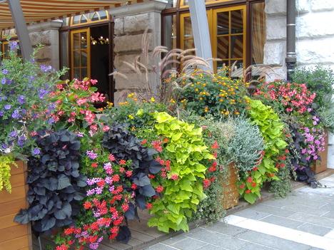 A főbejárat virágai 2