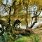 A fűzfám tavasszal