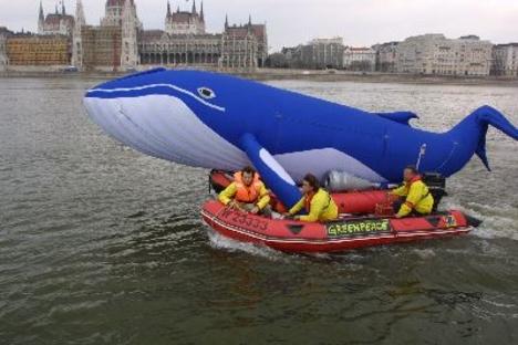 Greenpeace - Bálna-mentés a Dunán
