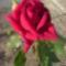 Kertünk virágai 10