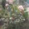Kertünk virágai 15