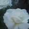 Kertünk virágai 18