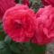Kertünk virágai 20