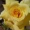 Kertünk virágai 24
