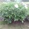 Kertünk virágai 4