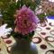 Rózsaszínű őszirózsa