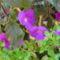 virág 010 Mesevirág Icától