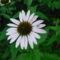 virág 019 Kasvirág