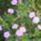virágaim_21